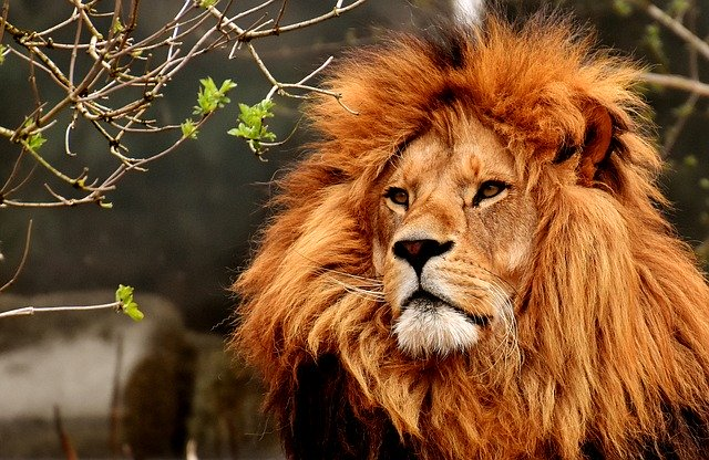 THE TOP TEN AMAZING ANIMALS OF KENYA: THE WORLD'S FASTEST, THE TALLEST, THE GIANT, THE KING AND MORE