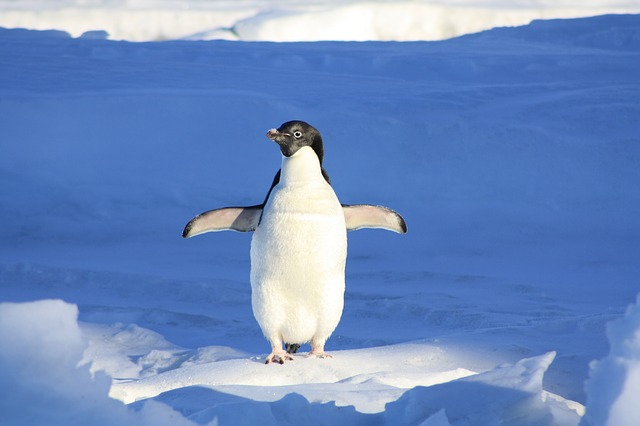 25 AMAZING FUN FACTS ABOUT PENGUINS